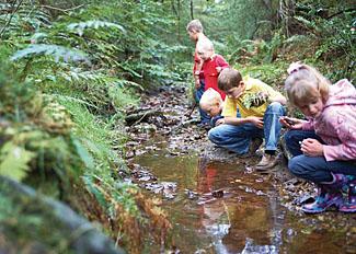 Explore forest trails near Keldy Holiday Lodges near Cropton North Yorkshire
