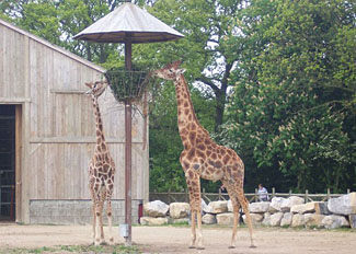 Enjoy the zoo at Flamingo Land Resort near Malton - See the Giraffes