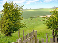 Scenic surrounding area at Danebury Manor Holiday Cottages in Flixton North Yorks