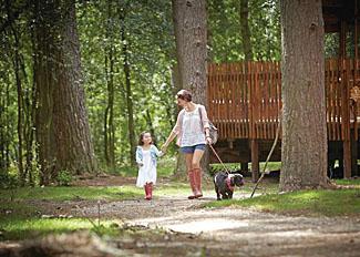 Keldy Forest surroundings near Keldy Forest Cabins Cropton North Yorkshire